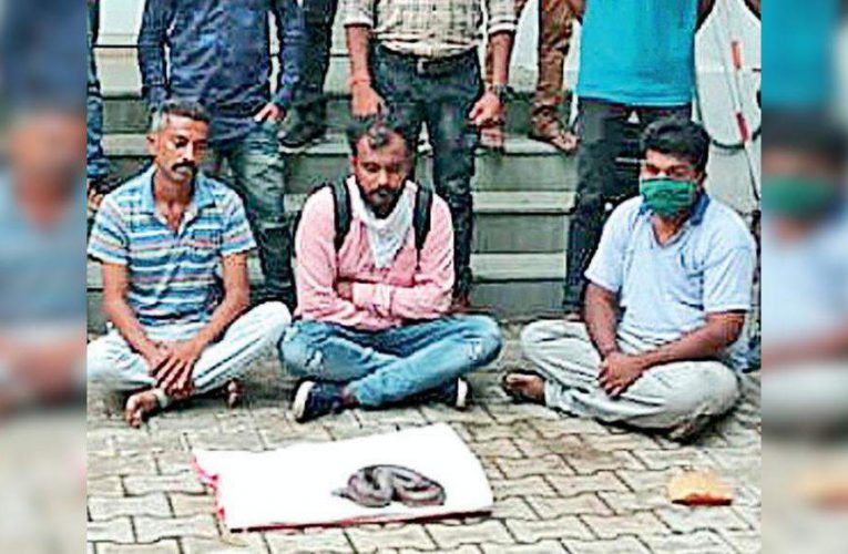 Gang selling red sand boa for Rs 42L held   Vadodara News